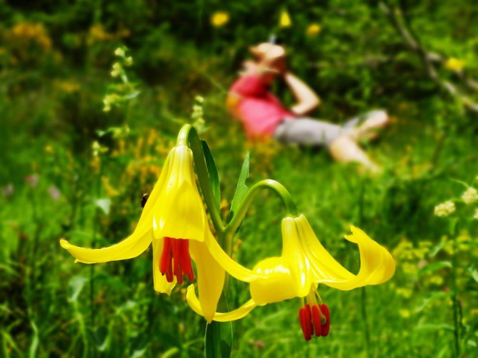 VIII Фестивал на дивите цветя в Родопите